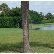 Земля во Флориде на продажу на восточном побережье